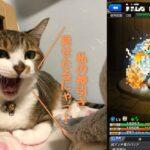 【モンストガチャ】キジトラ猫のそらに力を借りたら神引き??!